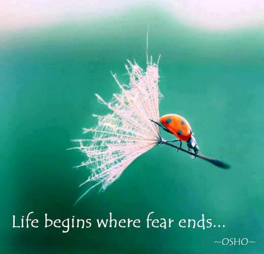 Life begins where fear ends...